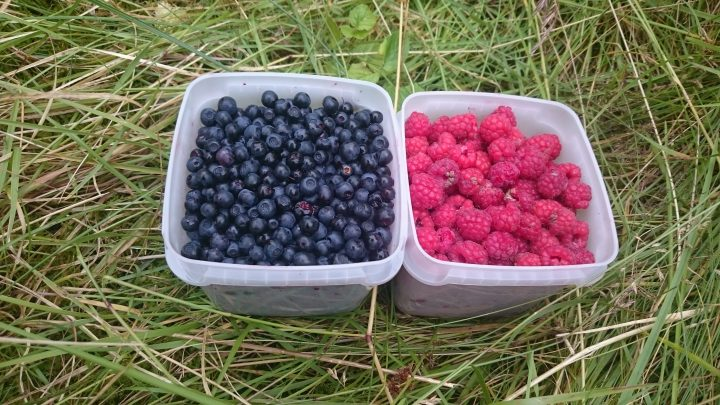 Plukk bær for å ha til høsten