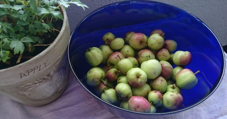 Jeg tester frukt- og sopptørker.